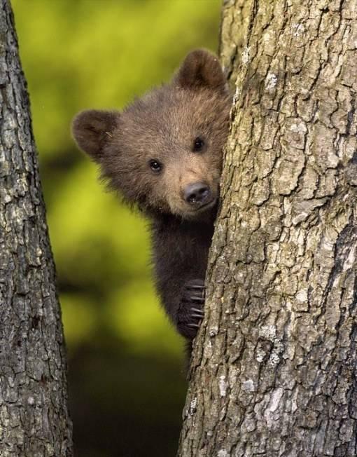 картинки медвежата в лесу с добрым утром что чертополох оберег